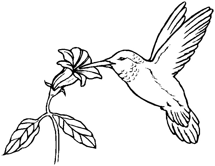 hummingbird do Colouring Pages